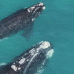 UP Whale Institute researcher organises open statement against marine life extinction